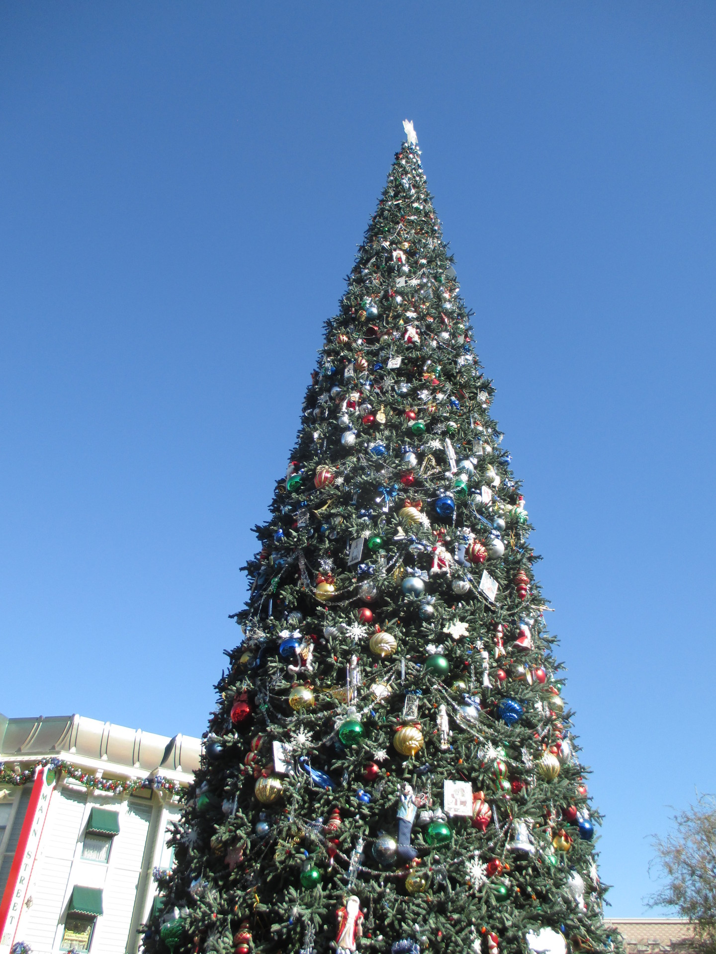 A Christmas Tree in Anaheim on a trip to Disneyland .
